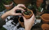 jardiner facilement