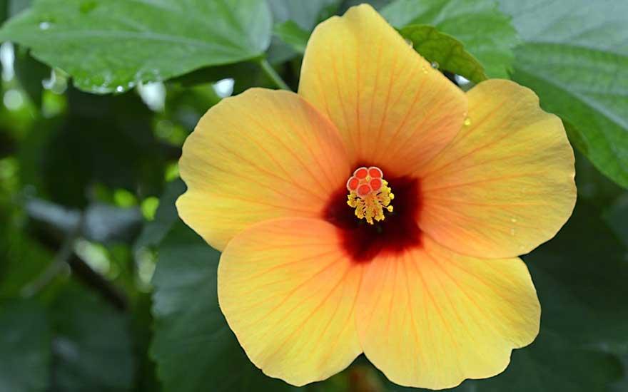 plante d'intérieur