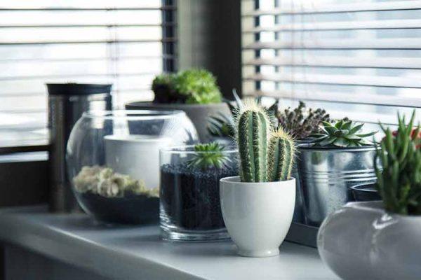 bienfaits plantes d'intérieur