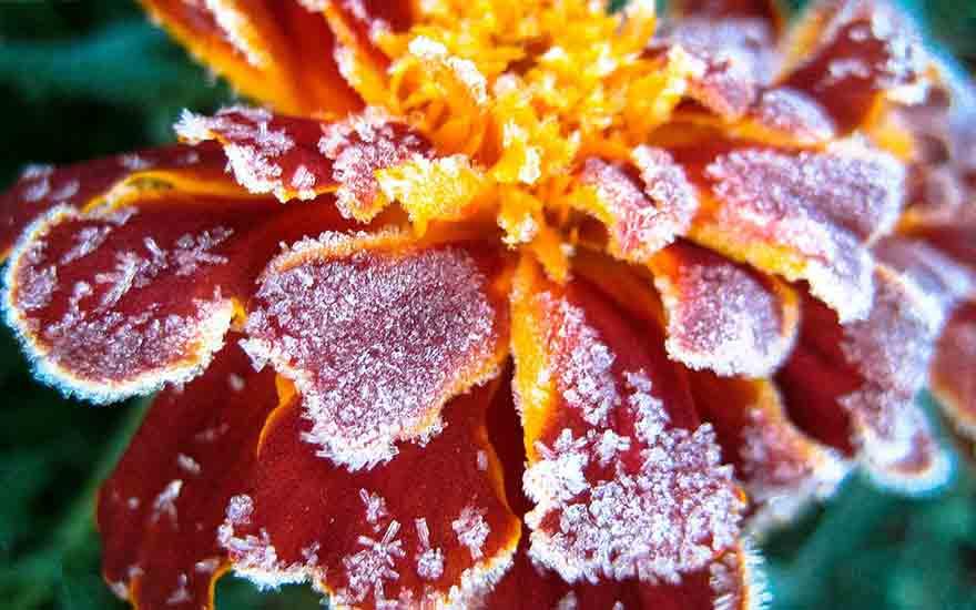 protéger les plantes du gel
