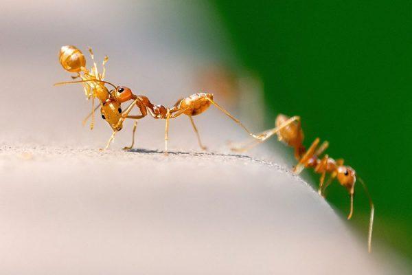 fourmis dans la maison