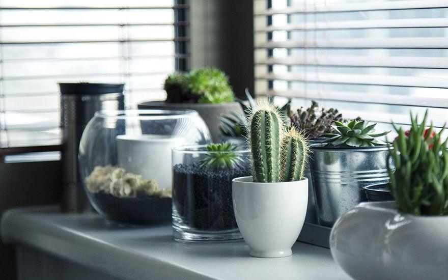 entretenir cactus
