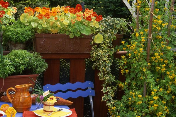 plantes grimpantes pour le balcon