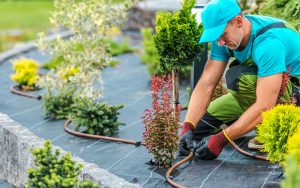 paysagiste qui aménage un jardin