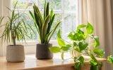 plante intérieur depolluante