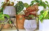comment disposer les plantes en appartement
