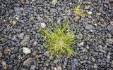 enlever les mauvaises herbes dans les graviers