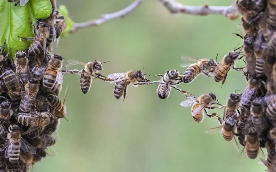 nid d'abeilles comment le détruire