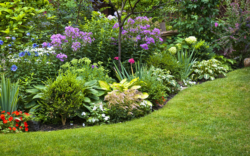 les plantes pour un jardin fleuri toute l'année